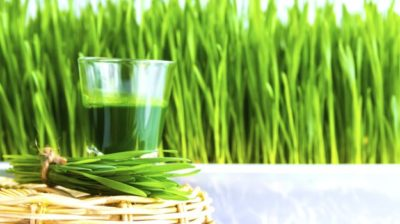 best wheatgrass powder
