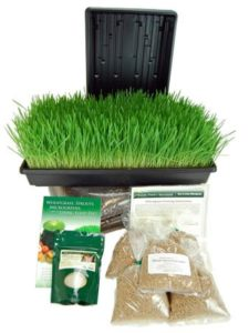 organic wheatgrass growing kit
