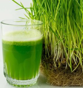 health benefits of barley grass juice powder