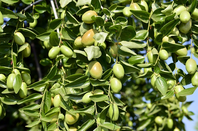 best jojoba oil for acne